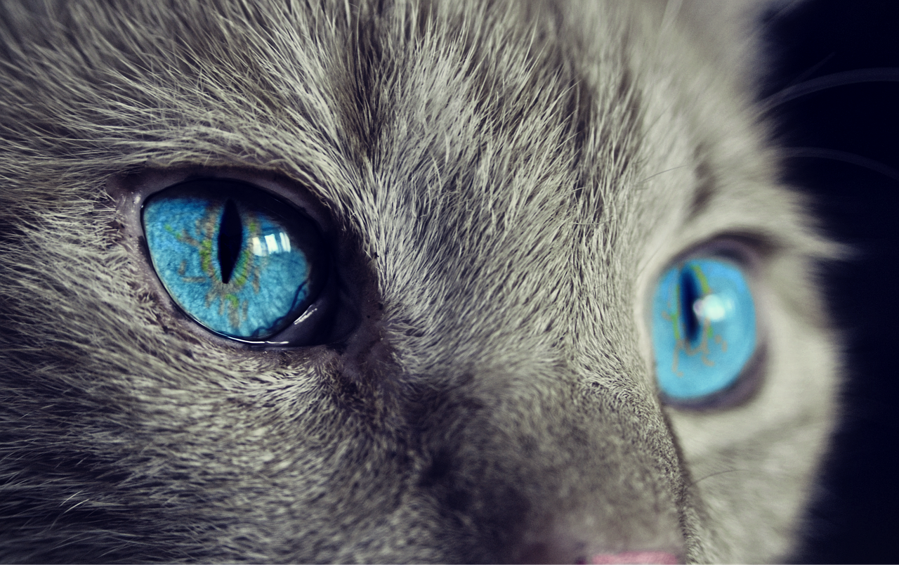 Was Sie über die Pflege Ihrer Katze wissen müssen